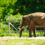 Big wild elephant — Stock Photo #55923703