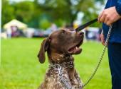 Adult cute Dog — Foto Stock