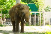 Büyük vahşi fil — Stok fotoğraf