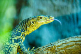 Beautiful wild lizard — Stockfoto