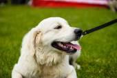 Adult cute Dog — Stock Photo