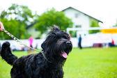 Adult cute Dog — Stock fotografie