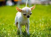 Adult cute Dog — Stok fotoğraf