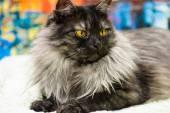 Adorable Funny cat — Stock fotografie