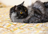 Adorable Funny cat — ストック写真