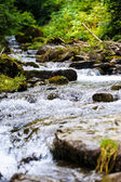 Beautiful view of mountain river — Stock Photo