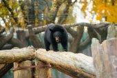 Bear Cub — Stock Photo