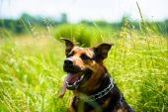 Happy adorable dog — Stock Photo
