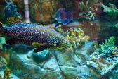 Рыба морская плавательный — Стоковое фото