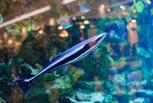 Море плавание рыб — Стоковое фото