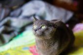 Śmieszny kot młodych — Zdjęcie stockowe