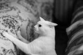 有趣的年轻猫 — 图库照片