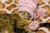 Gracioso gato — Foto de Stock