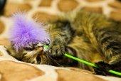 Funny playful cat — Stock Photo