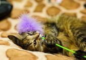 Funny playful cat — Stock Photo