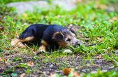 Cute young puppy — Stock Photo