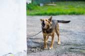 Angry dog — Stock Photo