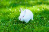Funny baby white rabbit in grass — Stockfoto