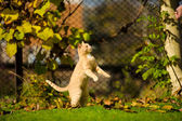 Funny jumping cat — Stock Photo