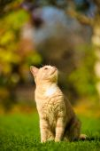 Funny red-haired cat — Stockfoto