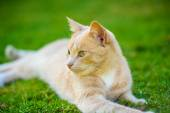 Funny red-haired cat — Stock Photo