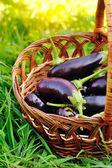 Fresh eggplant in basket on grass — Stock Photo