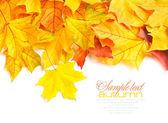 Marco de frontera de hojas de otoño coloridas aislado en blanco — Foto de Stock
