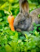 Funny baby gray rabbit with a carrot in grass — Stock Photo