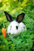Komik bebek beyaz tavşan bir carrot çim ile — Stok fotoğraf