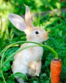 Funny baby rabbit with a carrot in grass — Stock Photo