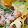 Brown acorns on autumn leaves, close up — Stock Photo #53802529