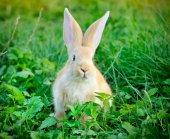 Little rabbit in green grass — Foto de Stock
