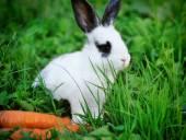 Bebé divertido conejo blanco con una zanahoria en la hierba — Foto de Stock
