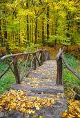 Bridge in bright autumn forest. Natural composition — Stockfoto