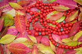 Autumn leaves and red beads on a wooden background — Photo