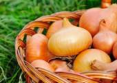 Fresh onions in basket on grass — Stock Photo