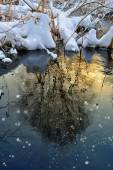 Tree reflected in water at sunset in winter — Stock Photo