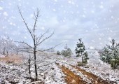 Beautiful landscape with first snow — Stock Photo