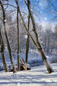 Beautiful winter landscape in sunny frosty day — Stok fotoğraf