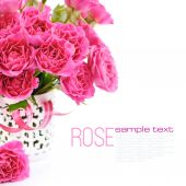 Bouquet of pink roses on white background — Stock Photo