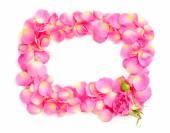 A frame of pink rose petals — Stock Photo