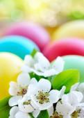 Färgade påskägg med vita blommor — Stockfoto