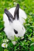 Baby white rabbit on grass — Stock Photo