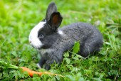 Funny baby rabbit with a carrot on grass — Stock Photo