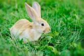 Little rabbit on green grass — Stock Photo