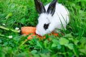 Funny baby white rabbit with a carrot on grass — Stock Photo