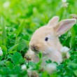 Little rabbit on green grass — Stock Photo #68286451