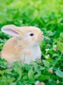 Petit lapin sur l'herbe verte — Photo