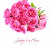 Rosa rosen auf weißem hintergrund — Stockfoto