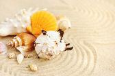 Sea shells on sandy beach — Stock Photo